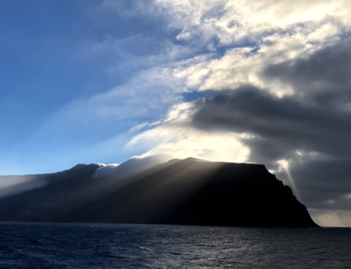 Guadalupe Island Fishing and Tackle Update